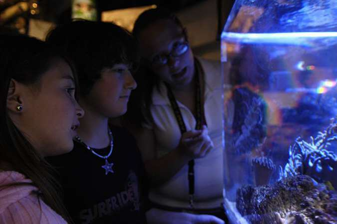 Children looking into an aquarium tank