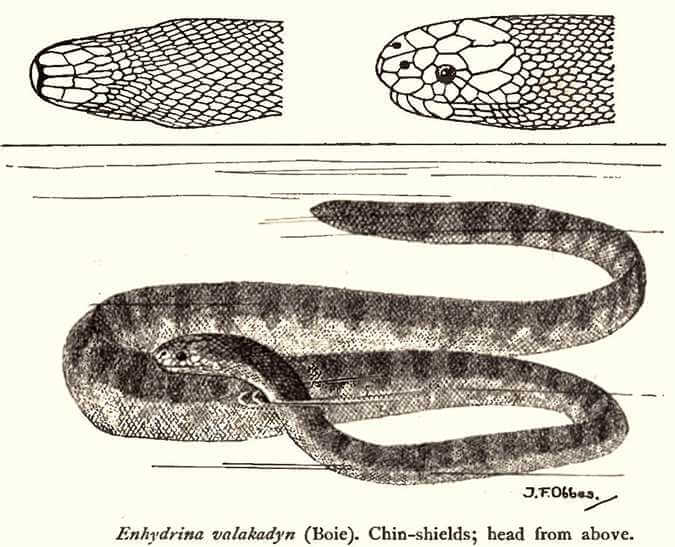 A diagram of a snake