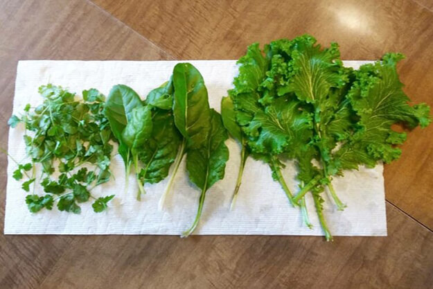 Cilantro, swiss chard, and mustard greens are laid on a paper towel, with a brown wooden table underneath
